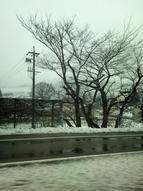 ☆ 初雪 ☆